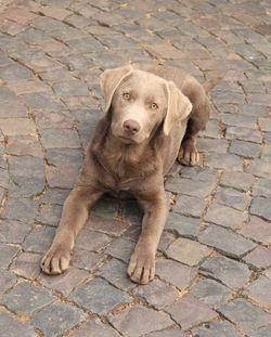 Familienhund Jana